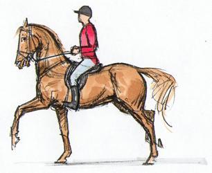 anzeichen rückenprobleme pferd